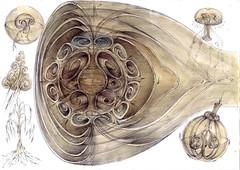 3 tera.unitate convectiei biologice si convectia termica in nor jpg (kelemengabi) Tags: vortex gabriel standing spiral wave theory sphere helix universal resonance kelemen