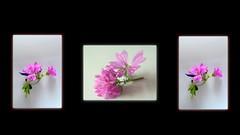 E DIO CREO'  I FIORI A SOMIGLIANZA DEL SUO SPLENDORE ! (mario dsn 45) Tags: flowerthequietbeauty