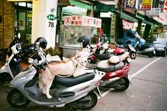 * (Danny Chou) Tags: leica dog film 35mm silver f14 400 fujifilm mp ttl summilux asph ae rf viewfinder m7 fle  xtra  072  35mmf14 rangerfinder