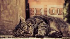 Harry (No_Water) Tags: cat nip addicts hellopusycat