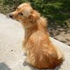 IMG_2931 (VIPevent) Tags: bitzi serbien kettenhund