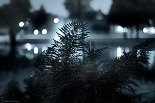 Night Reflections