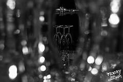 Roy & Meggie #22 (Noeky1980 Photography) Tags: flowers wedding feest blackandwhite bw white black netherlands canon happy groom bride shoot married zwartwit ringen marriage 7d justmarried zwart wit marry bloemen trouw huwelijk reportage trouwen blij 24105 weddingshoot bruid bruidegom nuray trouwreportage huwelijken canoneos7d canon7d noeky noeky1980 nuray1980 noeky1980photography