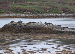 Seals at Oldany Island