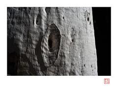 Arboreal Imagination (heritagefutures) Tags: leica ltm test gardens lens 50mm nikon dof australia historic national f adapter botanic canberra konica shallow dslr act d800 hexar f35 enlarging 39mm konishiroku