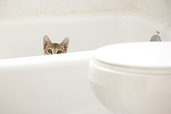 You Are Being Watched (jkoshi) Tags: cat bathroom diego angela koshi jkoshi