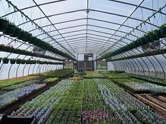 Flower Greenhouse (UnitedSoybeanBoard) Tags: flowers horizontal farm greenhouse