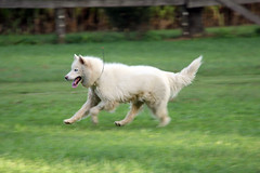 """Princess In A Speed Blur • <a style=""""font-size:0.8em;"""" href=""""http://www.flickr.com/photos/96196263@N07/9707703946/"""" target=""""_blank"""">View on Flickr</a>"""
