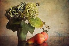 days decrease (silviaON) Tags: stilllife flower fruit pears september vase hydrangea textured 2013 memoriesbook texturetime stilllifephotoart isabellafranceaction top2013