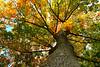 Below (princesspink 77) Tags: autumn tree leaves natural autumnleaves below redleaves yellowleaves odc orangeleaves odc2 fmsphotoaday