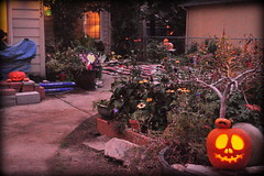 Hallowe'en 2013 (fyberduck) Tags: eve decorations halloween jack all pumpkins hallows olantern