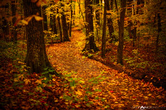 Forest in Fall #2 (Matt Anderson Photography) Tags: trees color fall nature leaves wisconsin forest alone seasons path fallcolors nobody pathway devilslake mattanderson mattandersonphotography