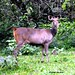 "Sambar • <a style=""font-size:0.8em;"" href=""http://www.flickr.com/photos/109145777@N03/10940803355/"" target=""_blank"">View on Flickr</a>"