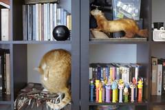 film (La fille renne) Tags: pez film ikea home analog cat 35mm library decoration books taxidermy newhome expired canonae1program expiredfilm 50mmf18 kodakgold200