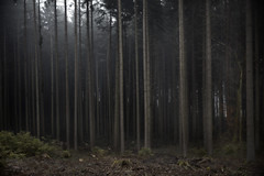 Trees (Joerg Marx) Tags: wood trees light forest woodland licht wald bume