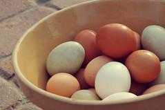 eggs in a bowl (KelliCampbell) Tags: eggs fresheggs farmfresh bowlofeggs colorfuleggs springeggs