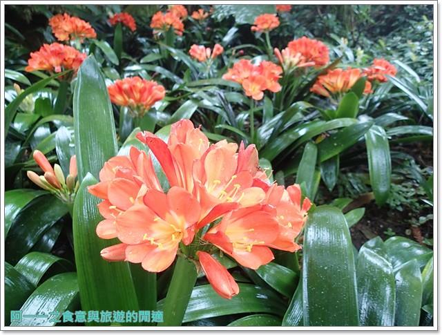 南投溪頭自然教育園區台大image123