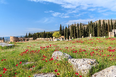 Spring at Hierapolis-Pamukkale, Turkey (UNESCO world heitage site) (Maria_Globetrotter) Tags: world old flowers red summer heritage beautiful field weather canon turkey landscape greek spring cool nice ancient perfect warm europa europe mediterranean day antique south türkiye picture pic visit unesco clear turquie türkei anemone poppy poppies times cypress typical monuments cupressus blommor province turkish attraction pamukkale vackra southwestern tiden frühling vår turquía denizli coronaria turcja turkiet medelhavet romar ilkbahar antiken 550d bloms 1585 anemoner img6985 världsarv römischer bukettanemon regionwide romartiden mariaglobetrotter pwpartlycloudy frygien blomfält
