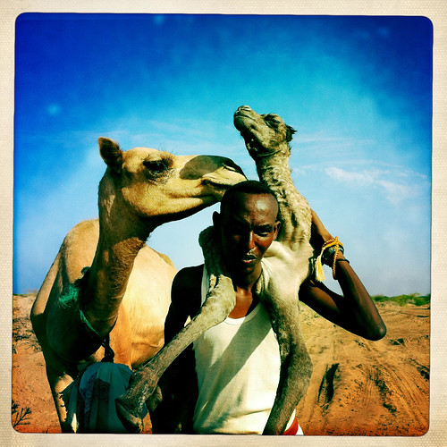 A Man Carrying A Baby Camel On His Back, Lughaya Area, Somaliland