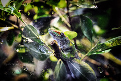 Jeko (*Emilio Giordano) Tags: cute verde animal natura jeko