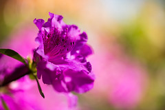 (Pierre Fridel) Tags: flowers france flower color macro texture fleur colors fleurs canon photography is europe photographie bokeh couleurs 100mm l 5d 28 usm couleur metz proxy moselle macrophotographie project52 100mml 5dmarkiii