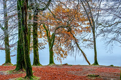 Fall Colors on Loch Oich #2 (Matt Anderson Photography) Tags: 2017 landscape mattandersonphotography scotland uk unitedkingdom hoarfrost magical color nopeople river garry loch oich invergarry december winter lush nature frost frosted fragility ethereal woodland tree outdoors paranormal mystery fantasy tranquilscene fog sunrisedawn coldtemperature scenics traveldestinations autumn idyllic meadow ephemeral emergence majestic ruralscene beautyinnature beechtree moss root perthshire theend lochoich fallcolors madison wisconsin usa