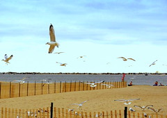 Winter Day On The Beach (dimaruss34) Tags: newyork brooklyn dmitriyfomenko image winter manhattanbeach sky clouds beach birds
