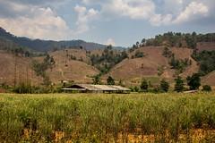 Thajsko-barmské zemědělské pohraničí (zcesty) Tags: thajsko3 rýže pole krajina thajsko maekasa dosvěta tambonphrathat changwattak thailand th