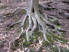 Roots (Jeff Coons) Tags: travel forest canon germany deutschland is europe hiking hike powershot hills marburg wandern lahn wander sd940