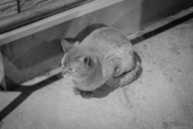 Today's Cat@2013-05-28