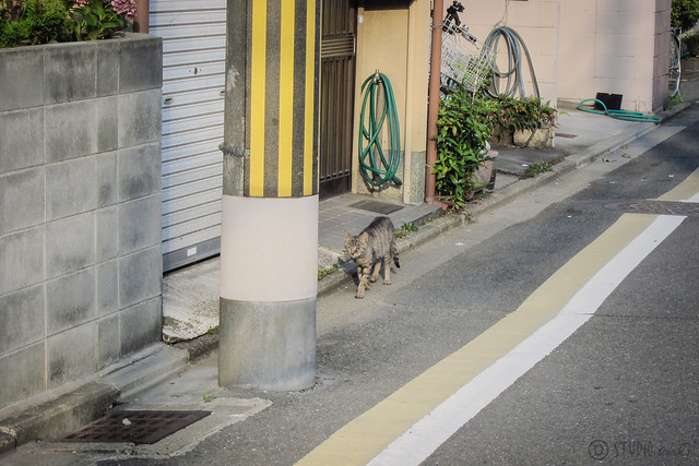 Today's Cat@2013-07-13