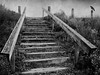 Locust Lake (2bmolar) Tags: bw steps crow day208 odc schuylkillcounty stonedagain locustlake texturebyjerryjones day208365 3652013 365the2013edition 27jul13 crowbyme