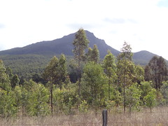 5-y.o forest planted by Greenfleet at Minjelha Dhagun, in front of Mt Barney, QLD - July 2013 (Greenfleet Australia) Tags: trees sink australia qld queensland carbon treeplanting biodiversity mtbarney reforestation makeadifference nativetrees revegetation greenfleet carbonsequestration nativeforest site333 biosequestration minjelhadhagun site333minjelhadhagun