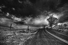 Lost in the field... [Explore] (louieliuva) Tags: