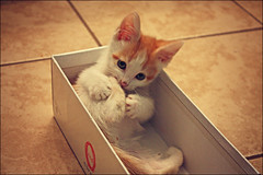Footsy (K. Sawyer Photography) Tags: baby cute animal kitten box adorable foster