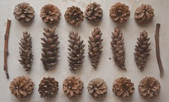 autumn. (elisadeluca_eli) Tags: wood autumn brown cold pine relax september goodmorning autunno settembre freddo cones marrone legno pigne