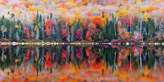Fall Reflections at Ricker Pond (chris lazzery) Tags: autumn reflection leaves vermont fallfoliage groton canonef70200mmf4l rickerpond grotonstateforest 5dmarkii rickerpondstatepark