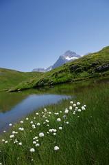 imgp4289 (maza34) Tags: grindelwald bachalpsee suisse2013