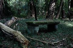 Platz zum Verweilen (Rubina V.) Tags: friedhof cemeteries tree nature cemetery forest natur wald bume brandenburg moos stahnsdorf