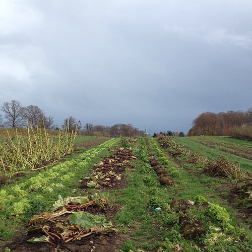#funfact: Man kan stadig høste salat i november.