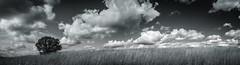 Hillside (Kevin Rodde Photography) Tags: blackandwhite panorama tree grass clouds canon woods monotone r carl prairie hansen greyscale 6d prairiegrass rodde fpdcc carlrhansenwoods kevinrodde kevinroddephoto kevinroddephotography