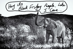Yea Its Black Friday (Wizard of Wonders™) Tags: africa blackandwhite baby elephant feet up animal landscape photography nationalpark bush african wildlife dry brush hills safari trunk outback namibia etosha mamal fullbody
