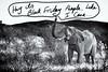 Yea Its Black Friday (Wizard of Wonders™) Tags: africa blackandwhite baby elephant feet up animal landscape photography nationalpark bush african wildlife dry brush hills safari trunk outback namibia etosha mamal fullbody