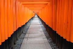千本鳥居と宮司 ~Fushimiinaritaisha (in Kyoto) &  Chief priest~ #Flickr12Days (jirojijp) Tags: red japan umbrella nikon kyoto chief priest torii d800 fushimiinaritaisha 1835mm thousandtorii dblringexcellence tplringexcellence eltringexcellence flickr12days