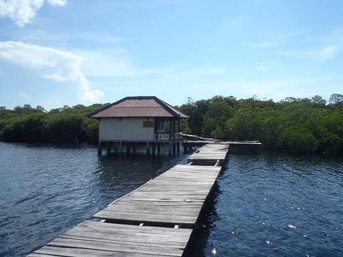 Hutan-Mangrove-di-Gili-Sulat-Lombok-Timur-0
