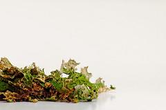 How you lichen me so far (dngrby) Tags: lichen justpentax