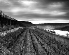 Mosel vineyards (week 3) (Wilco1954) Tags: vineyards luxembourg moselle ahn weatherphotography
