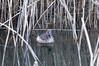 Spring Afternoon at Brandon Marsh (thesetter) Tags: spring naturereserve coventry dabchick littlegrebe tachybaptusruficollis brandonmarsh warwickshirewildlifetrust