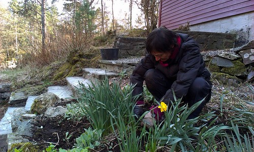Dugnad 2014 nr1: Ingvild plantar