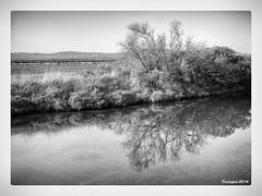 En reflet dans Les salins (declicfoto) Tags: monochrome reflets printemps contrejour